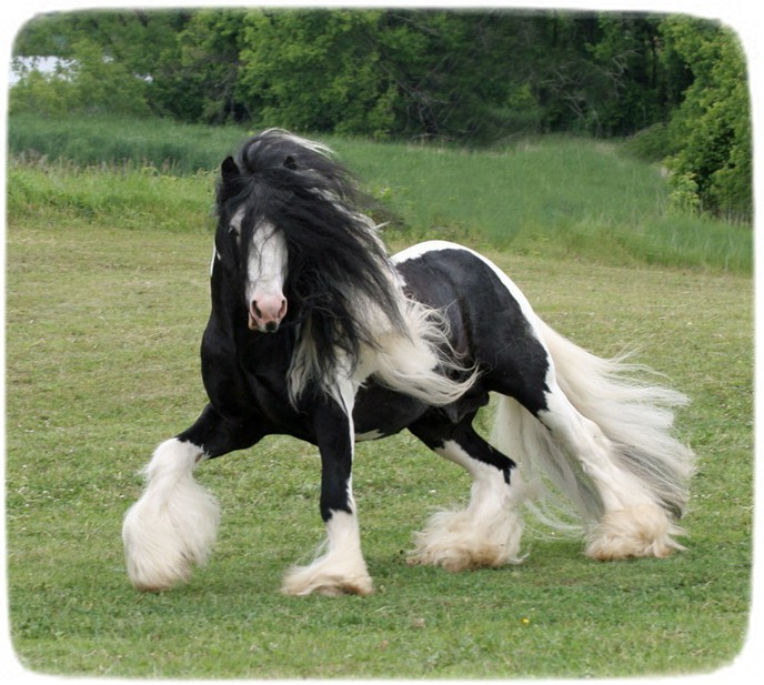 Images Of Horses And Ponies