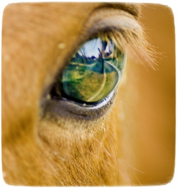 Images Of Horses Eyes