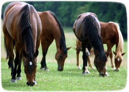 Images Of Horses Grazing