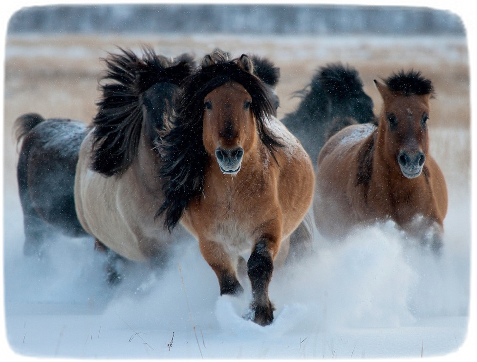 Images Of Horses In Snow