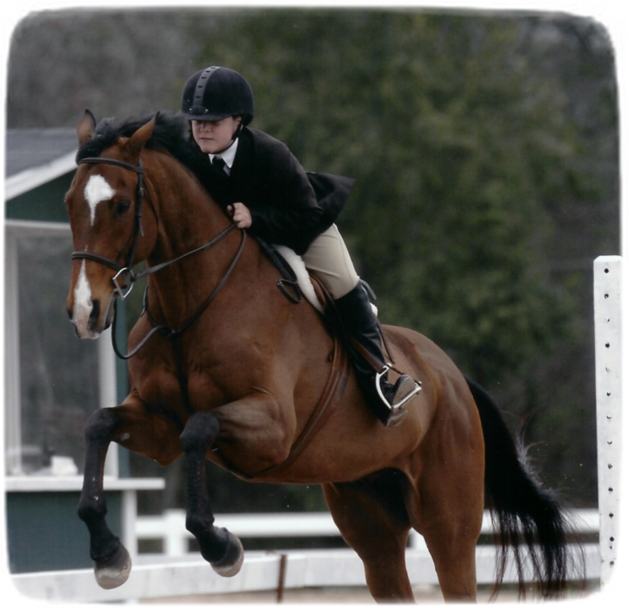 Images Of Horses Jumping