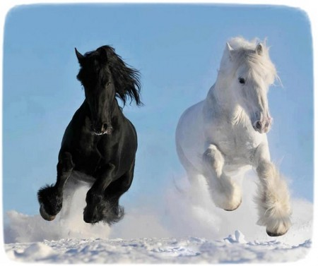 Images Of Horses Running