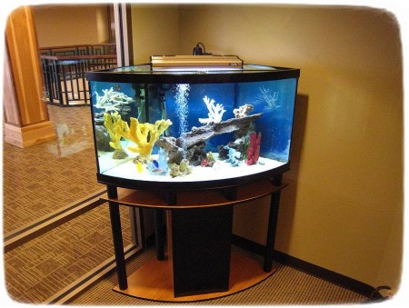 Images Of Saltwater Fish Tanks