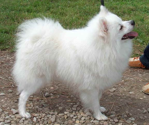 Italian Dog Breeds Pictures
