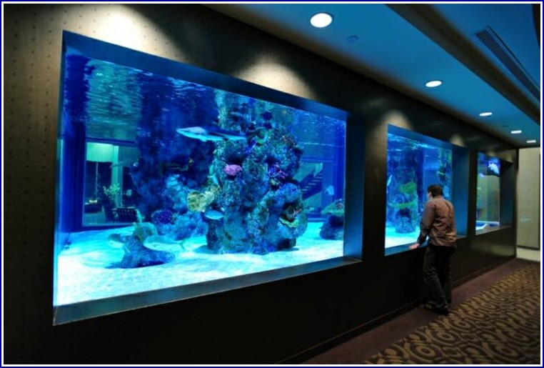 Large Custom Fish Tanks
