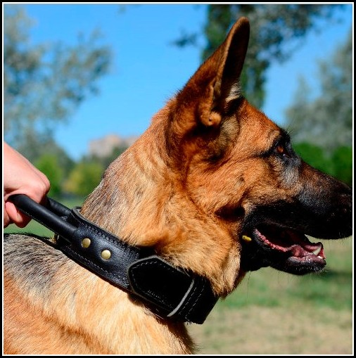 Large Dog Collars With Handle