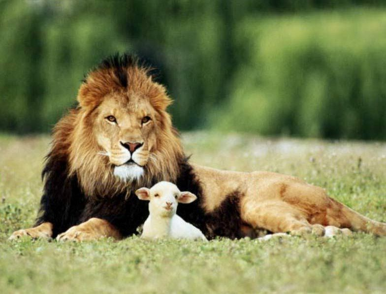 Lion And The Lamb Images