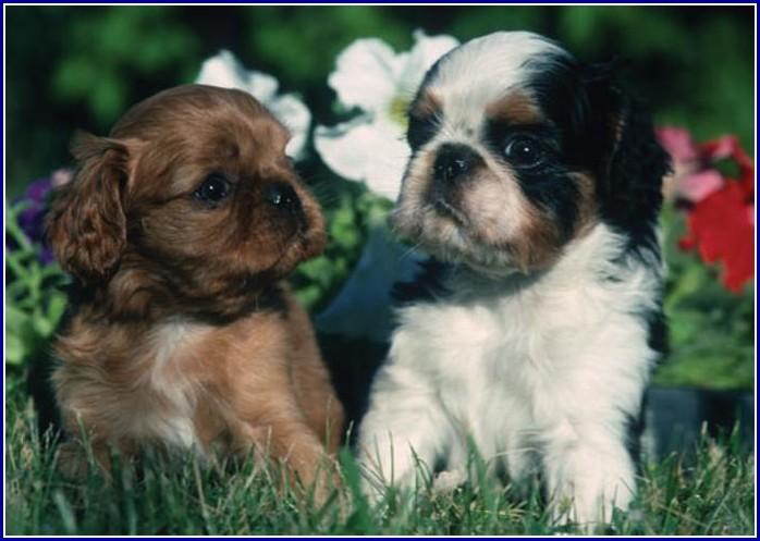 Mellow Dog Breeds Small