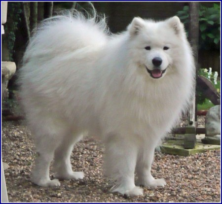 Most Friendly Dog Breeds