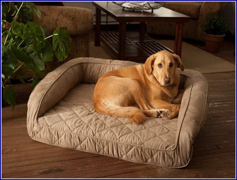 Petco Dog Beds Orthopedic
