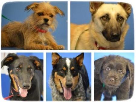 Petsmart Pets For Adoption