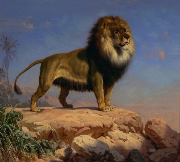 Picture Of A Lion Standing