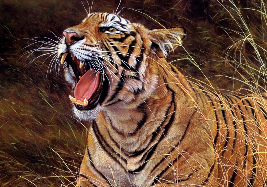 Picture Of A Tiger Roaring