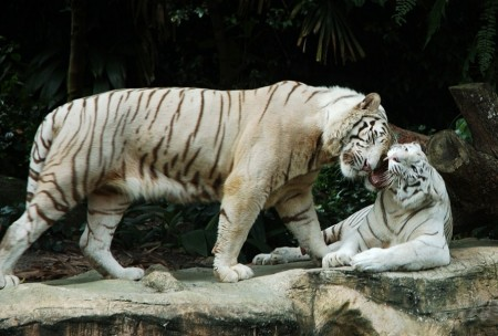 Picture Of A Tiger's Habitat