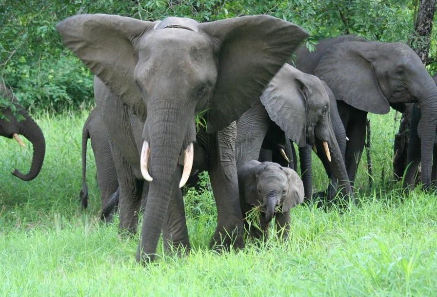 Picture Of Elephant In The Jungle