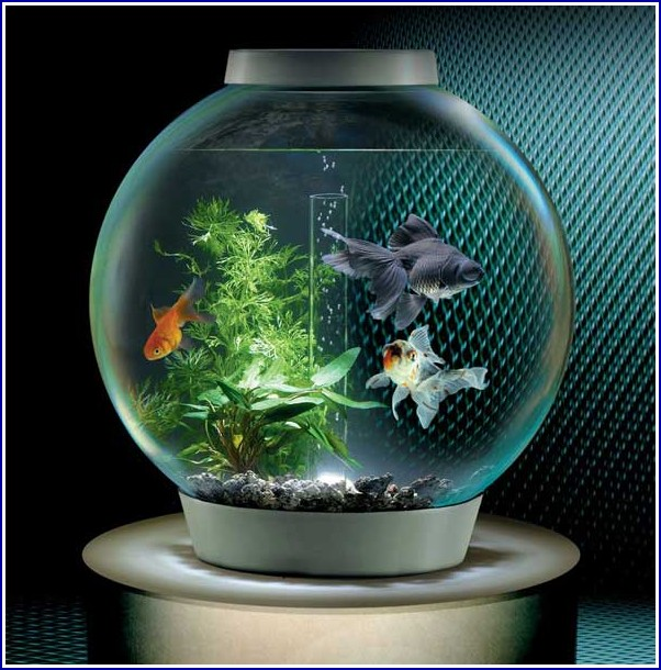 Picture Of Fish Tank