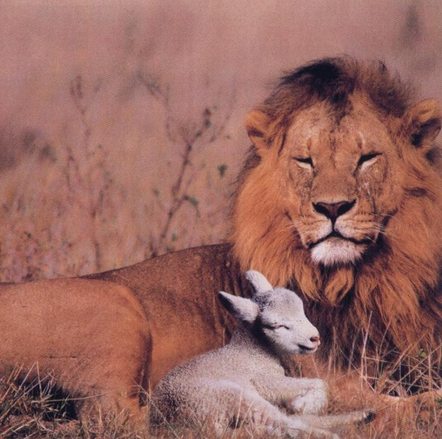 Picture Of Lion And Lamb
