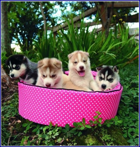 Pink Dog Beds For Medium Dogs