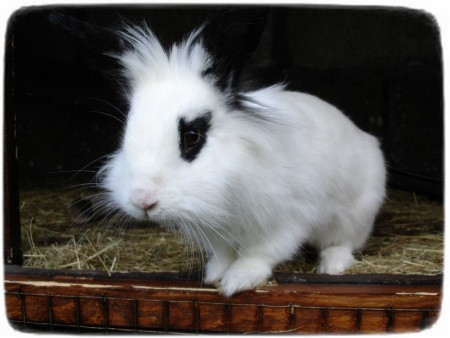 Rabbits As Pets Breeds
