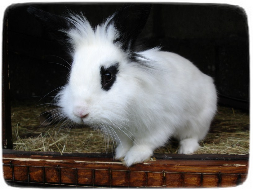 Rabbits As Pets Breeds