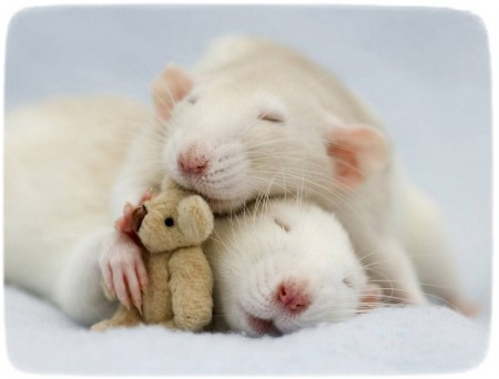 Rats As Pets For Children