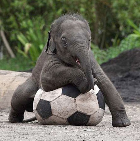 Really Cute Baby Elephants