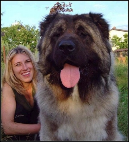 Russian Mountain Shepherd Dog