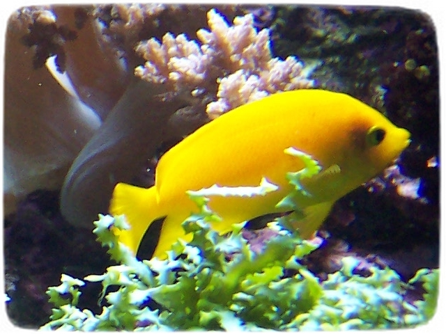 Saltwater Aquarium Fish List