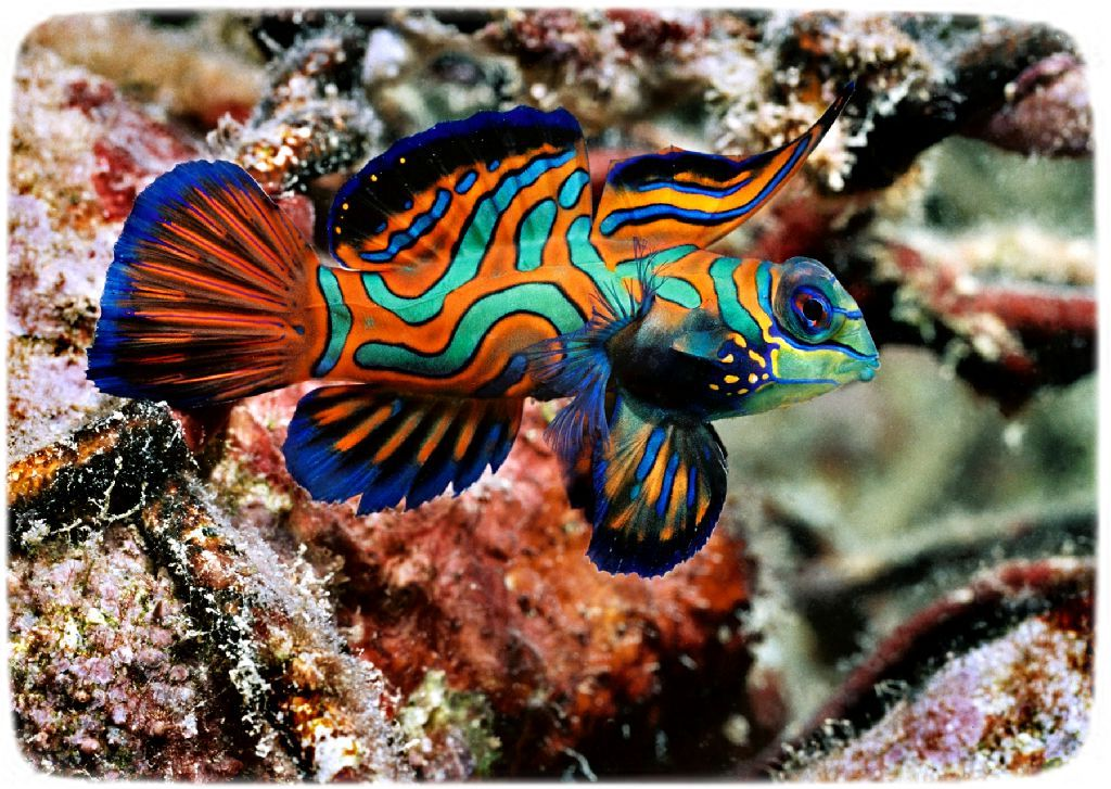 Saltwater Aquarium Fish Pictures