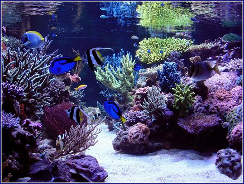 Saltwater Fish Tank Coral