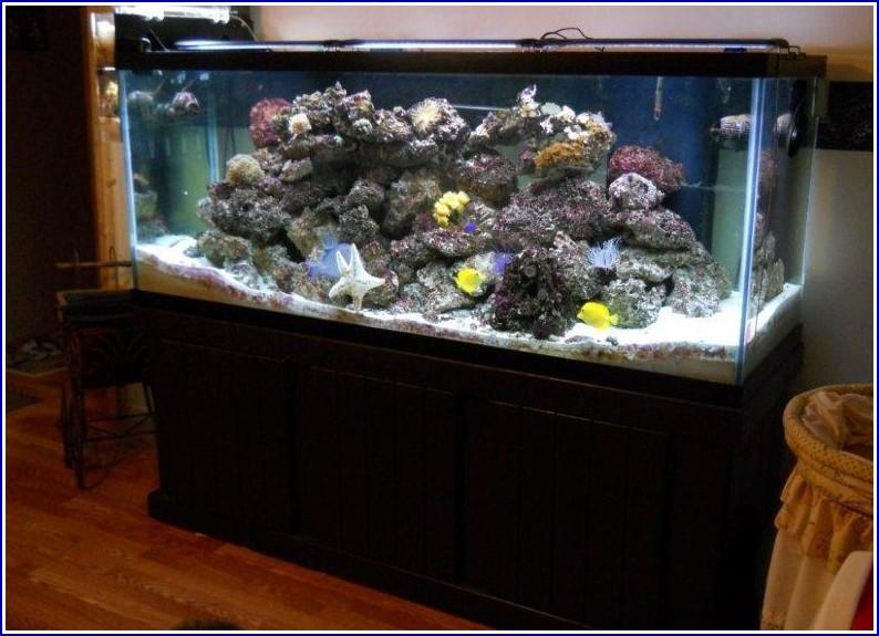 Saltwater Fish Tank Filter