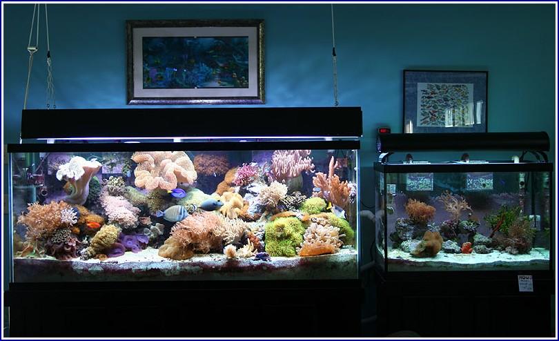 Saltwater Fish Tank Fish