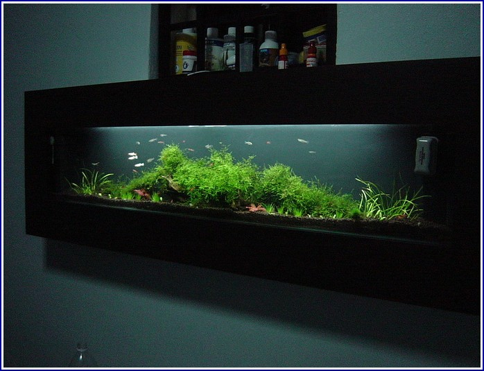 Saltwater Fish Tank In Wall