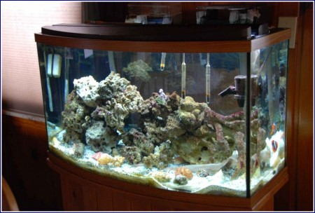Saltwater Fish Tank Pictures