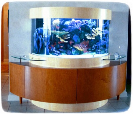Saltwater Fish Tanks In Wall