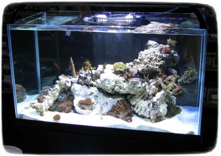 Saltwater Fish Tanks Pictures