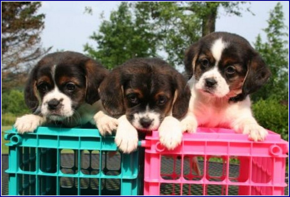 Shelters For Dogs In Queens Ny