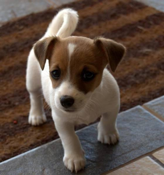 Small Dog Breeds List All