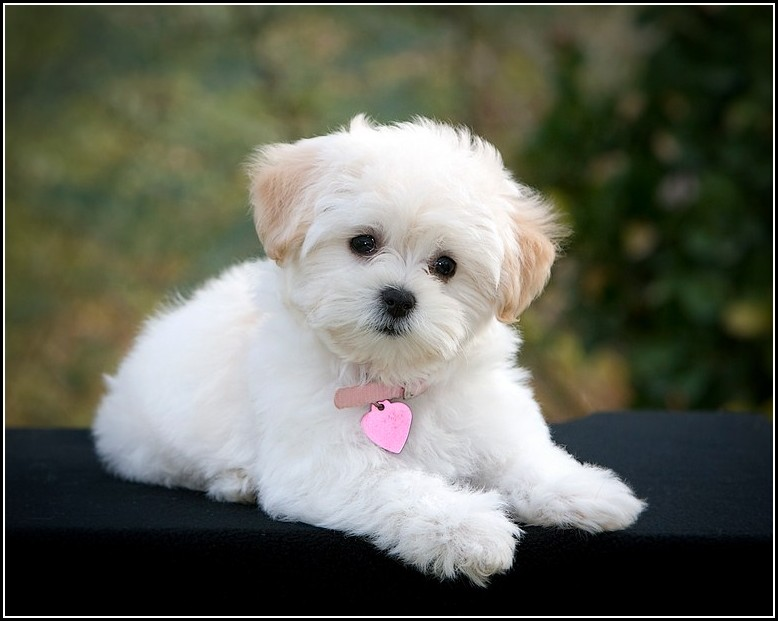 Small Sized Dogs Breeds