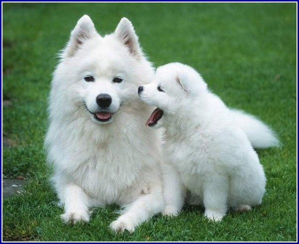 Small White Dog Images