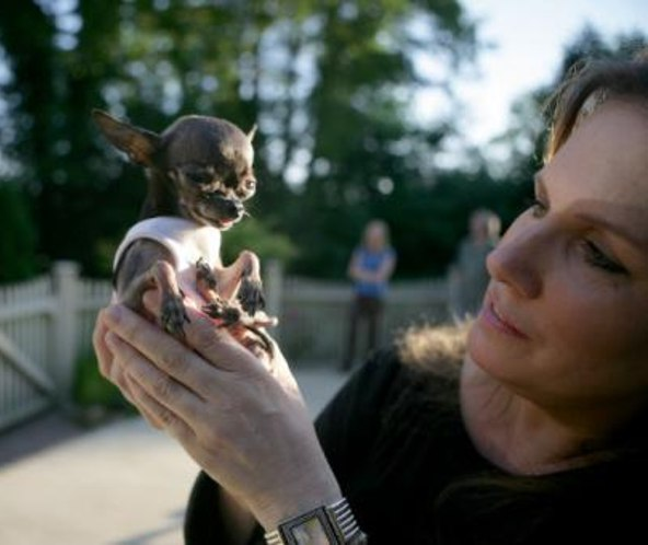 Smallest Dog Breed In The World