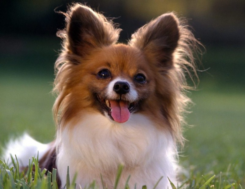 Smartest Breed Of Dog List
