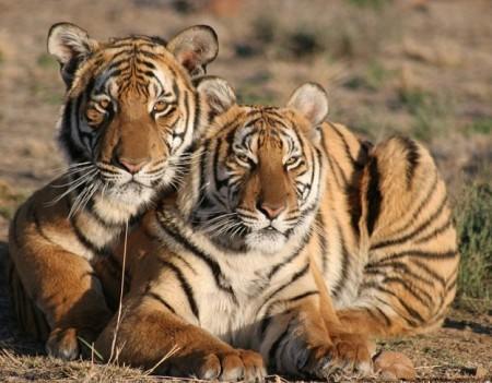 South China Tiger Habitat
