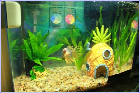 Spongebob Fish Tank Accessories