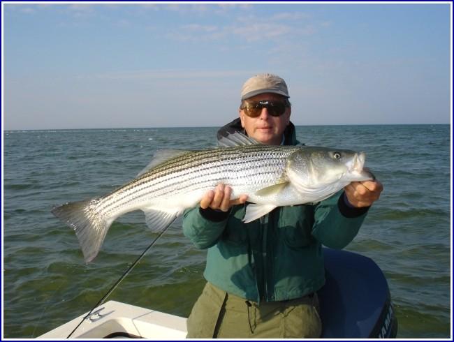 Striped Bass Fishing Virginia