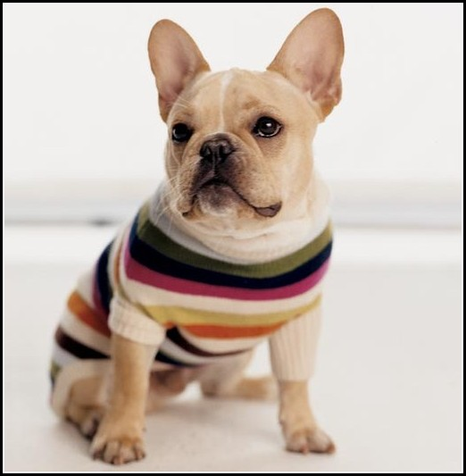 Sweaters For Dogs Amazon