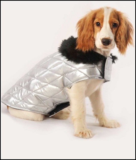 Sweaters For Dogs India