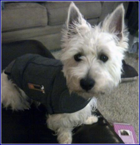 Thunder Shirts For Dogs Australia