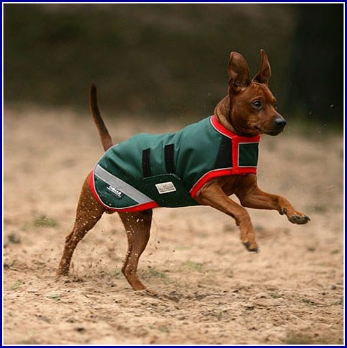 Thunder Shirts For Dogs Ireland