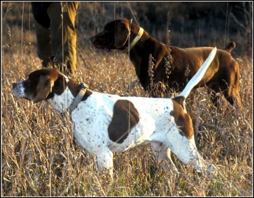 Types Of Hunting Dogs List
